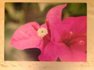Foto blomma 50*70 cm